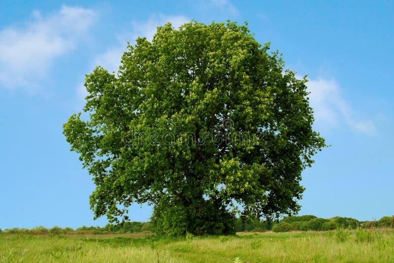 zielone pola krajobrazu zdjęcia stock