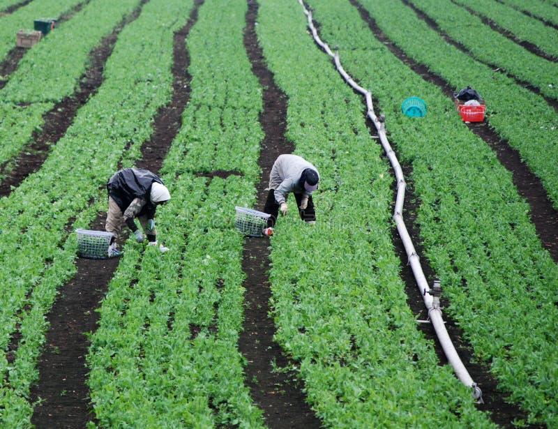zielone pola rolnych pracowników zdjęcia stock
