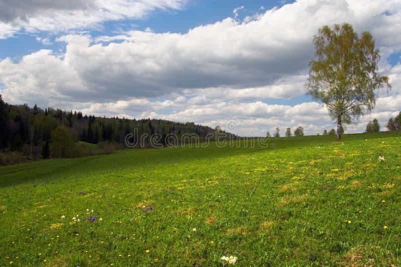 zielone pola samotne drzewo zdjęcie royalty free