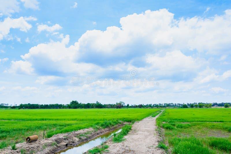 Zielone pole z niebieskim niebem zdjęcie stock