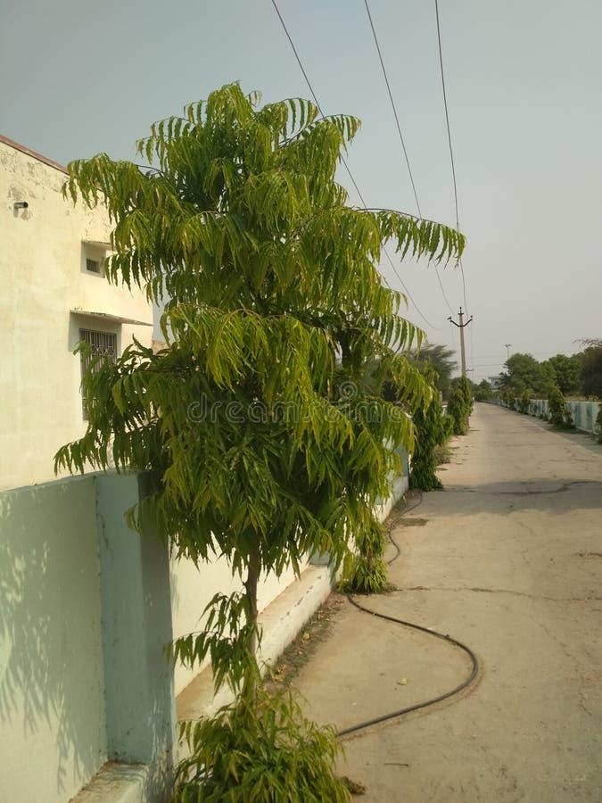 zielone rośliny obrazy stock