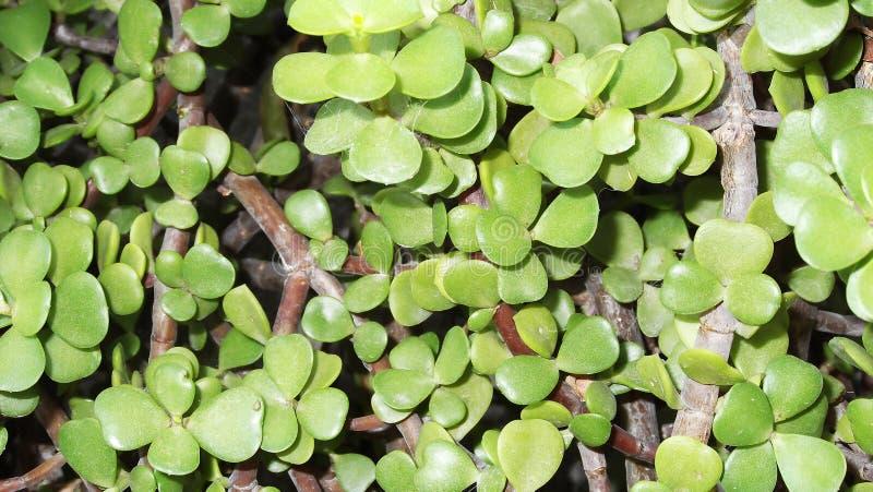 zielone rośliny zdjęcia stock