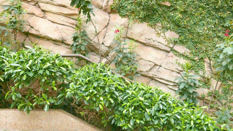 Zielone rośliny blisko kamiennej ściany fotografia stock