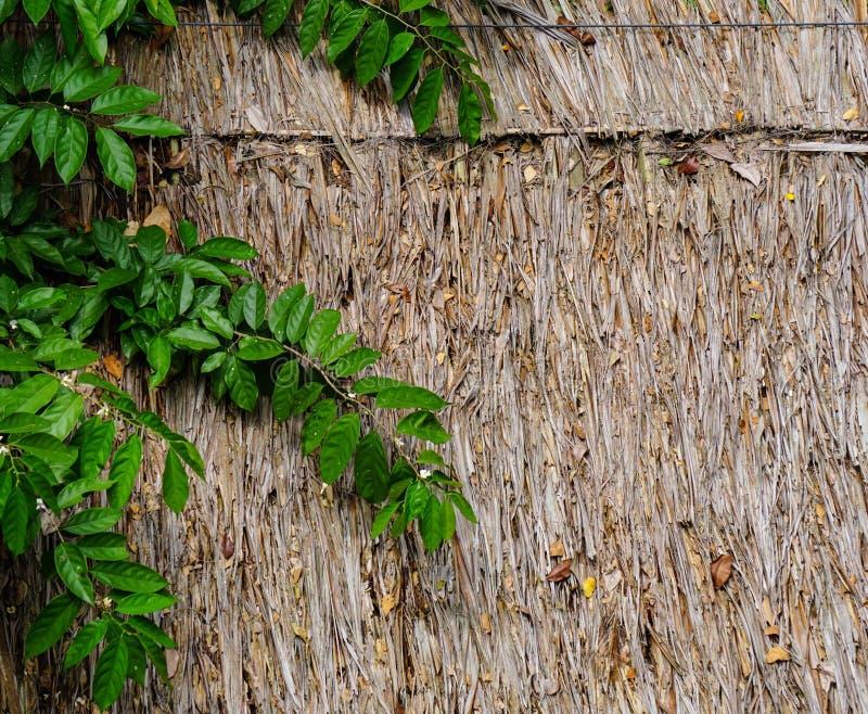 Zielone rośliny na drewnianej ścianie obrazy stock