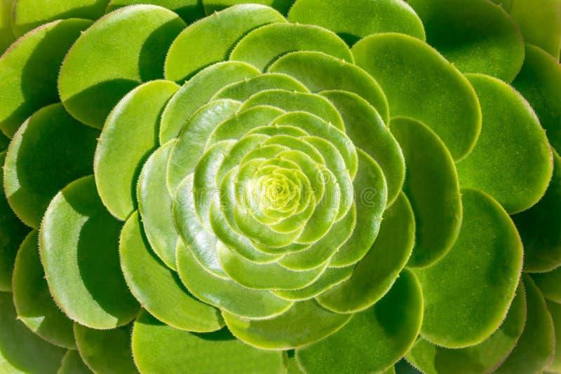 zielone rośliny soczyste obraz stock
