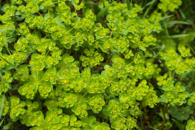 zielone ro?liny Naturalny t?o Wiosna zdjęcie royalty free
