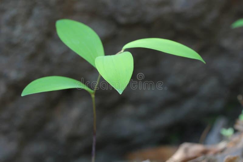 zielone sadzonki zdjęcia stock