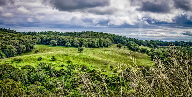 Zielone toczne łąki w australijczyka krajobrazie fotografia royalty free