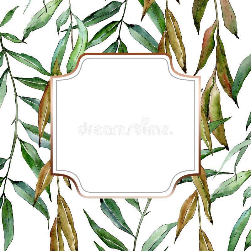 Zielone wierzb gałąź Akwareli t?a ilustracji set Ramowy rabatowy ornamentu kwadrat ilustracja wektor