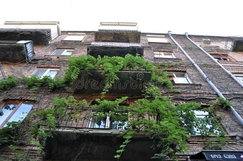 Zielone winorośle i balkony zdjęcia stock