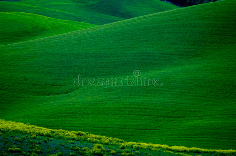zielone zboczy obraz royalty free