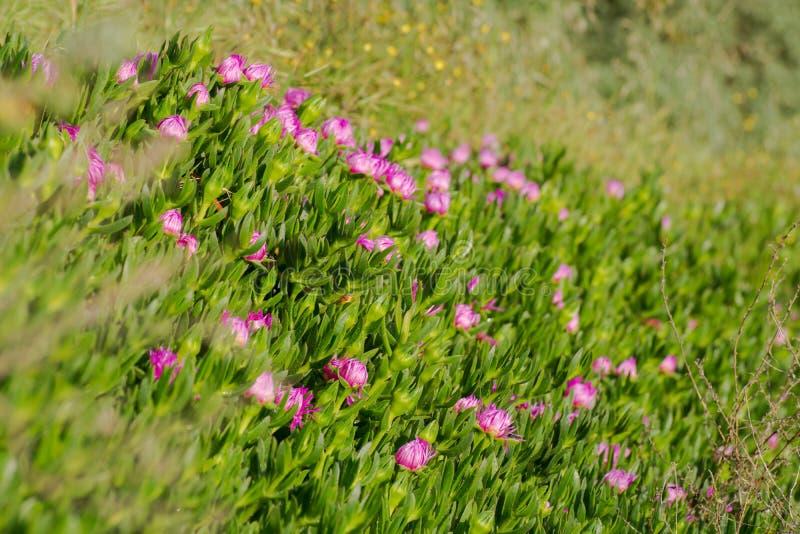 Zielonego brzeg kaktusowa trawa z kwiatami obrazy royalty free