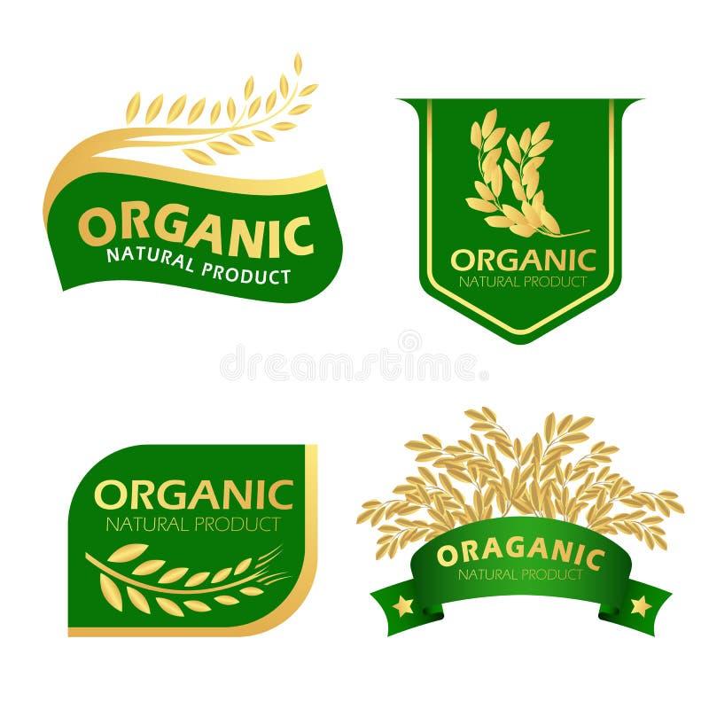 Zielonego i złocistego irlandczyków ryż naturalnego produktu organicznie sztandaru wektorowy projekt ilustracji