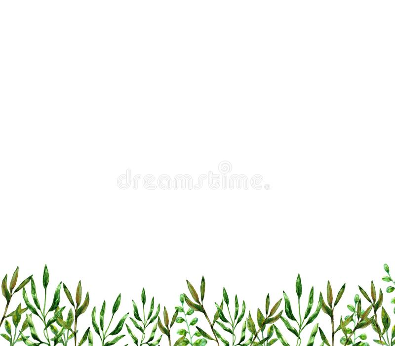 Zielonego lata rośliny elementów natury ornamentu dekoraci ciemna otoczka opuszcza liść rysującą akwarelę odizolowywa na białym t ilustracji