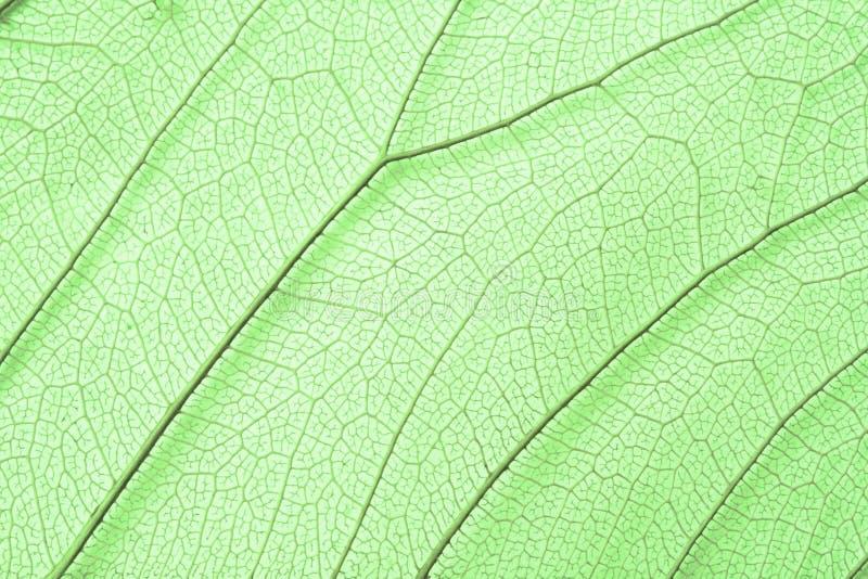 zielonego liść zredukowana struktura fotografia stock