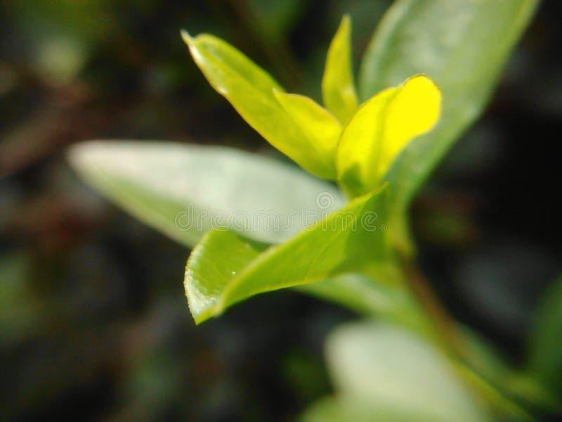 Zielonego liścia makro- obrazek zdjęcie stock