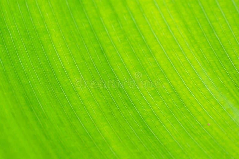 Zielonego liścia makro- tło fotografia stock