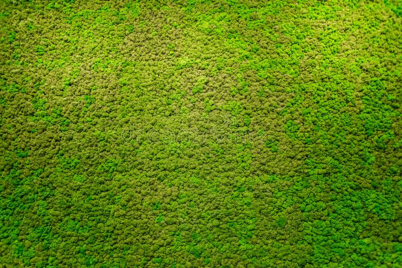 Zielonego mech piękna tekstura obrazy stock