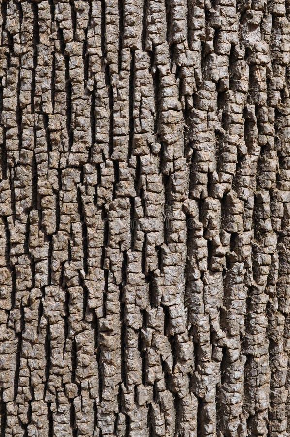 Zielonego popiółu barkentyna zdjęcia stock