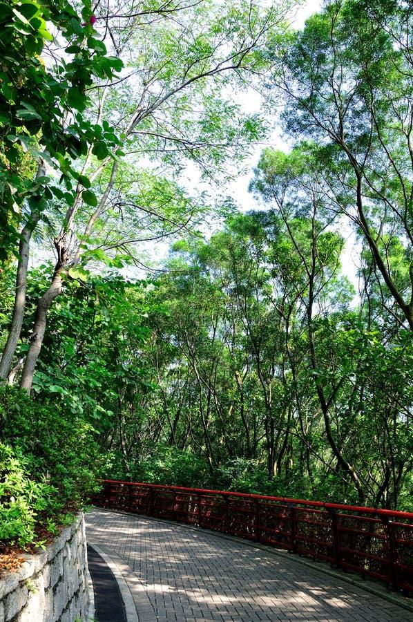 Zielonej ścieżki Rośliny Mała Obwódka Zdjęcia Stock