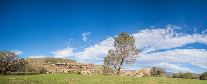 Zielonej grani Pojedynczy drzewo obrazy royalty free