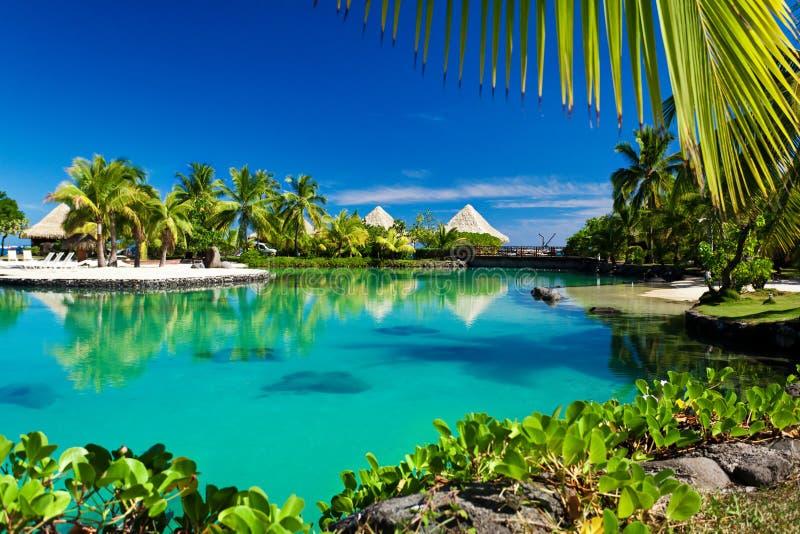 zielonej laguny palmowi kurortu drzewa tropikalni zdjęcia stock
