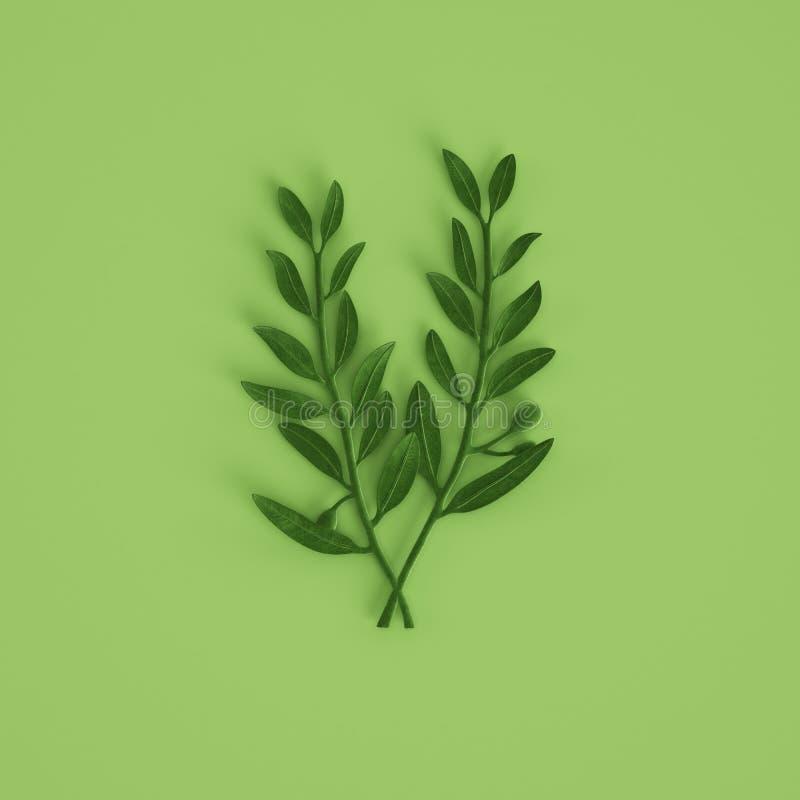 Zielonej oliwki branche rzeźba na pastel zieleni tle ?wiadczenia 3 d obrazy stock