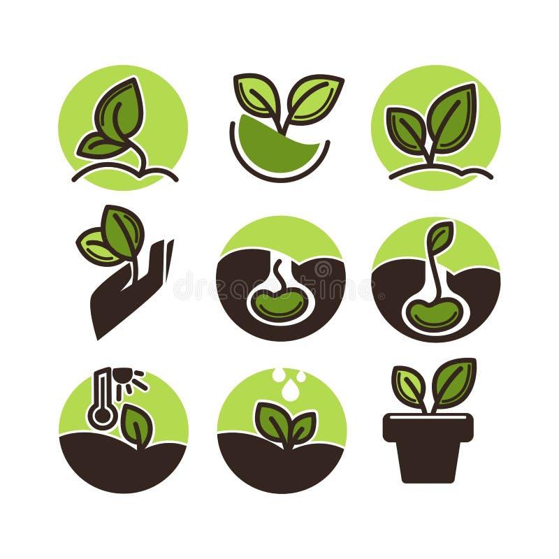 Zielonej rośliny dorośnięcie od ziarna odizolowywającego na białym tle ilustracja wektor