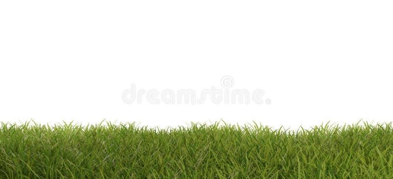 Zielonej trawy łąkowi ostrza trawa 3d-illustration ilustracja wektor