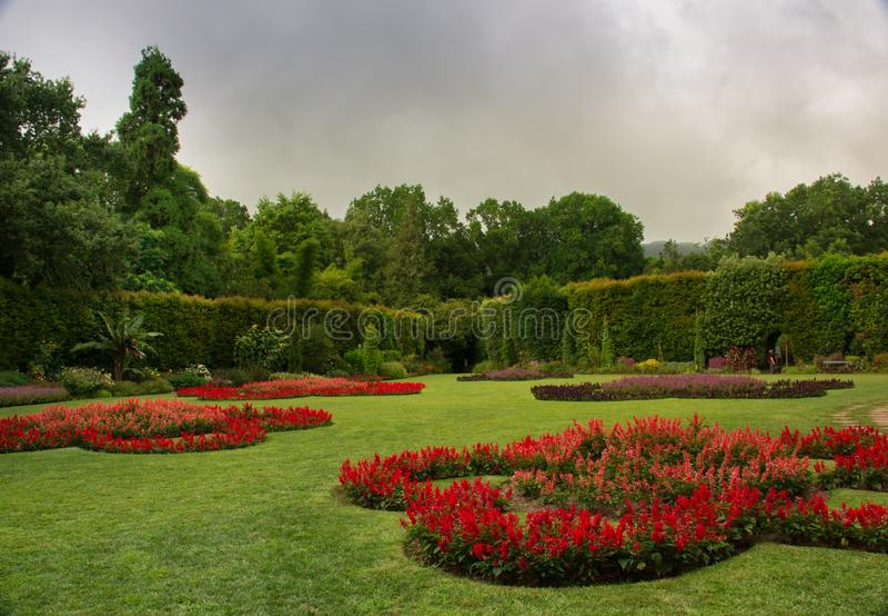 Zielonej trawy dywan plamiący z czerwonymi kwiatami obraz royalty free
