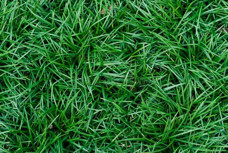 Zielonej trawy gazonu naturalny tło w odgórnym widoku obrazy stock