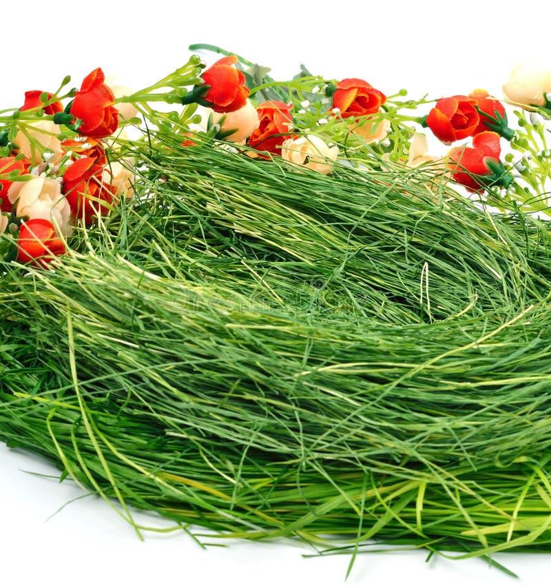 Zielonej trawy gniazdeczko zdjęcia stock