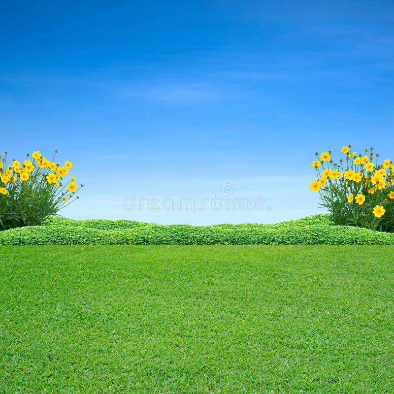 Zielonej trawy i kolor żółty kwiaty zdjęcia royalty free