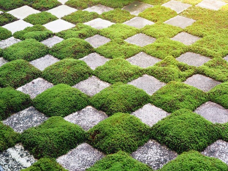 Zielonej trawy i skały wzory zdjęcia stock