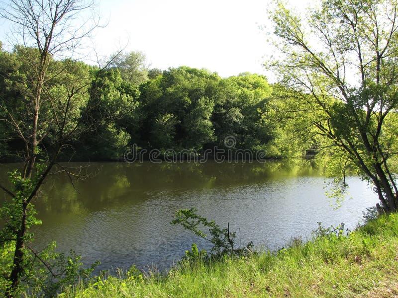 Zielonej trawy i wiosny las przy rzeką obrazy royalty free