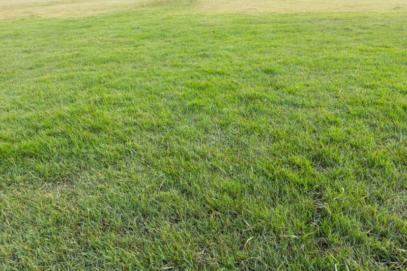 zielonej trawy jard, boisko, Zielonego gazonu naturalny wzór i półdupki, zdjęcia royalty free