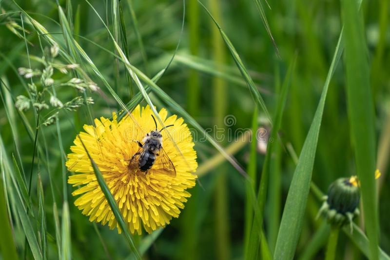 zielonej trawy komarnica i kwiat zdjęcia royalty free