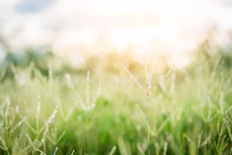 Zielonej trawy kwiatu t?o obraz stock