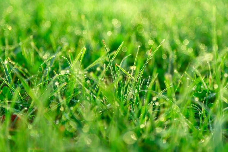 Zielonej trawy liście z ranek rosy kroplami przy wschód słońca obraz royalty free