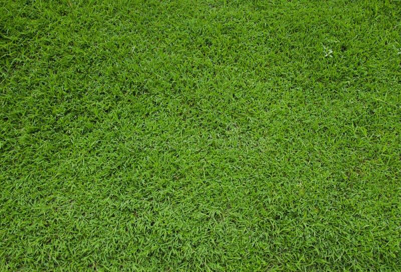 Zielonej trawy murawy podłoga tekstura obraz stock