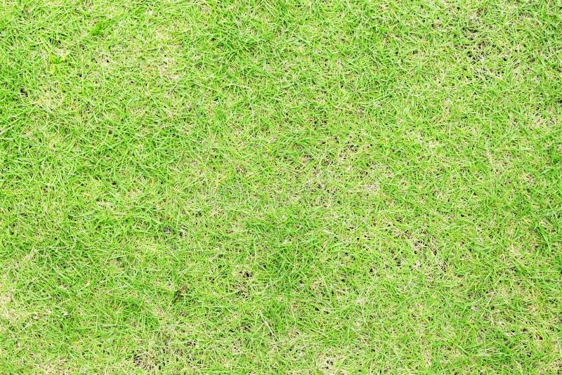 Zielonej trawy odgórny widok Naturalna fotografii tekstura tła śródpolna trawy zieleń obraz royalty free