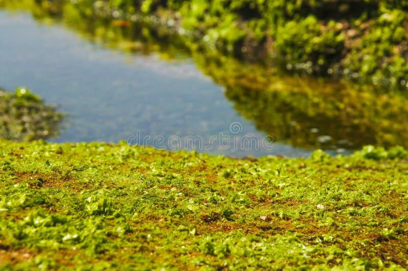 Zielonej trawy parang dowo plaża obrazy stock