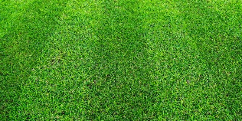 Zielonej trawy pola wzoru tło dla piłki nożnej i futbolu bawi się Zielony gazonu wzór, tekstura dla tła i zdjęcie stock