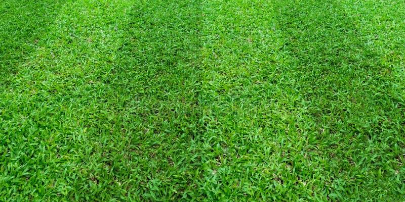 Zielonej trawy pola wzoru t?o dla pi?ki no?nej i futbolu bawi si? Zielony gazonu wzoru tekstury t?o ilustracji