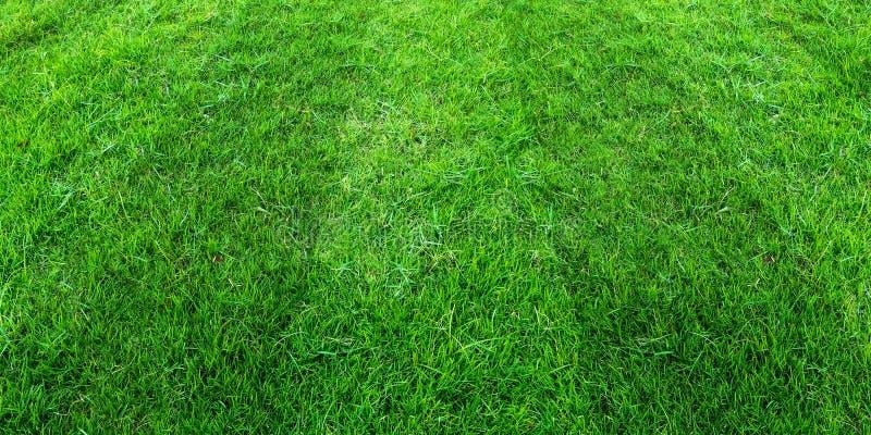 Zielonej trawy pola wzoru t?o dla pi?ki no?nej i futbolu bawi si? Zielony gazonu wzoru tekstury t?o royalty ilustracja