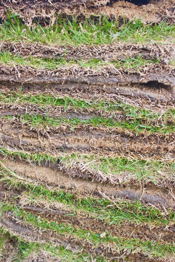 Zielonej trawy prześcieradła Jak warstwy. zdjęcie stock