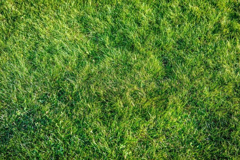 Zielonej trawy tło, naturalny gazon, światło słoneczne obrazy stock