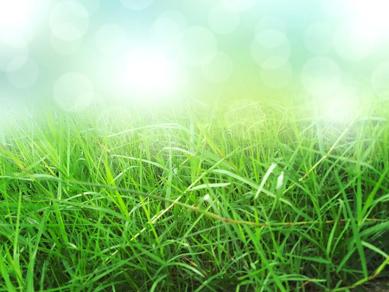 Zielonej trawy tło, natury tekstura zdjęcia royalty free