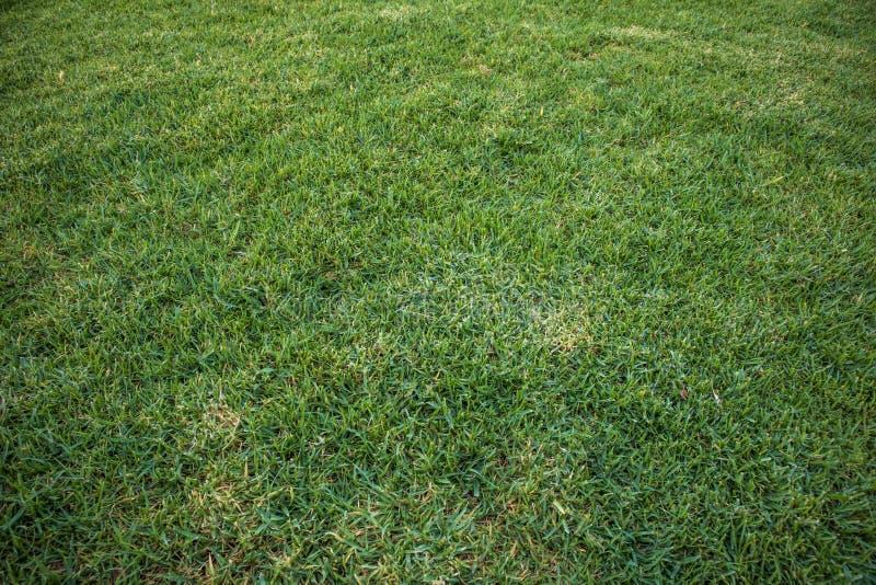 Zielonej trawy tło przy światłem dziennym, zbliżenie fotografia zdjęcie royalty free
