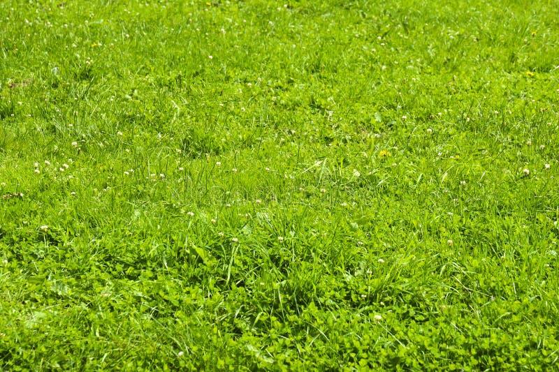Zielonej trawy t?o Tekstura z kwiatami fotografia royalty free